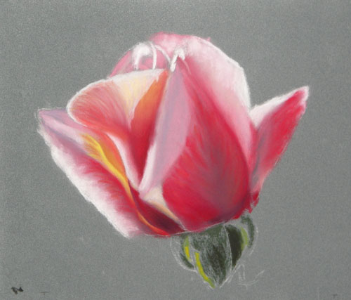Drawn rose soft pastel Pastel Early Soft in It'