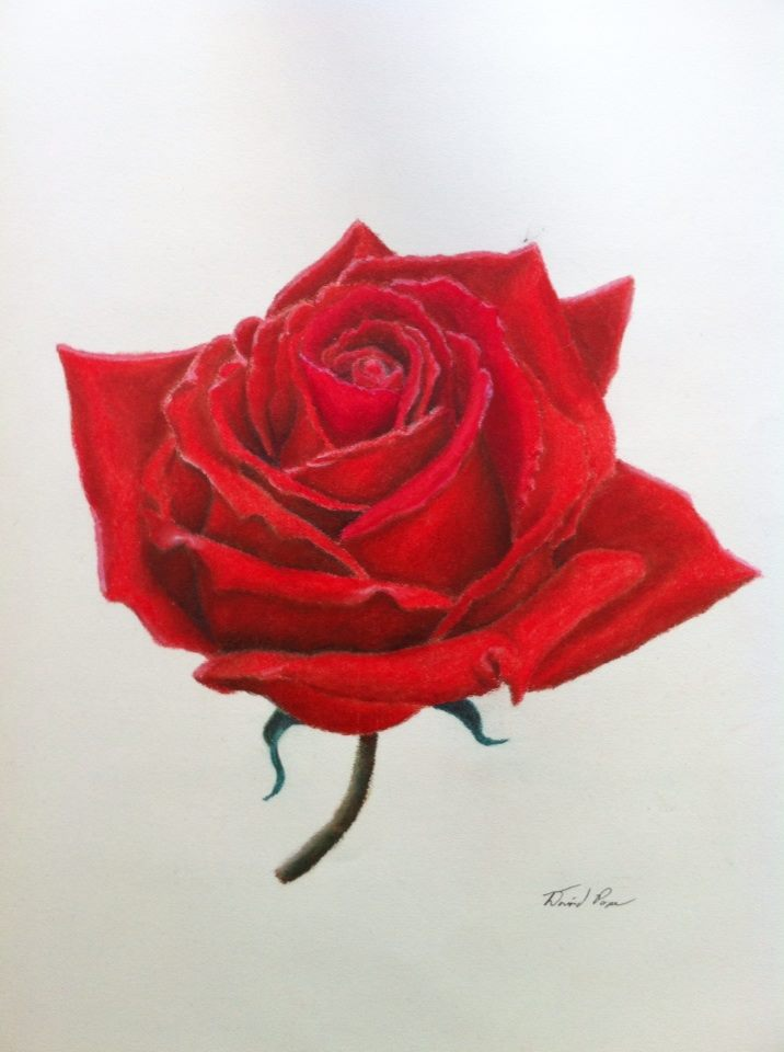 Drawn red rose soft pastel Medium Mixed and Rose
