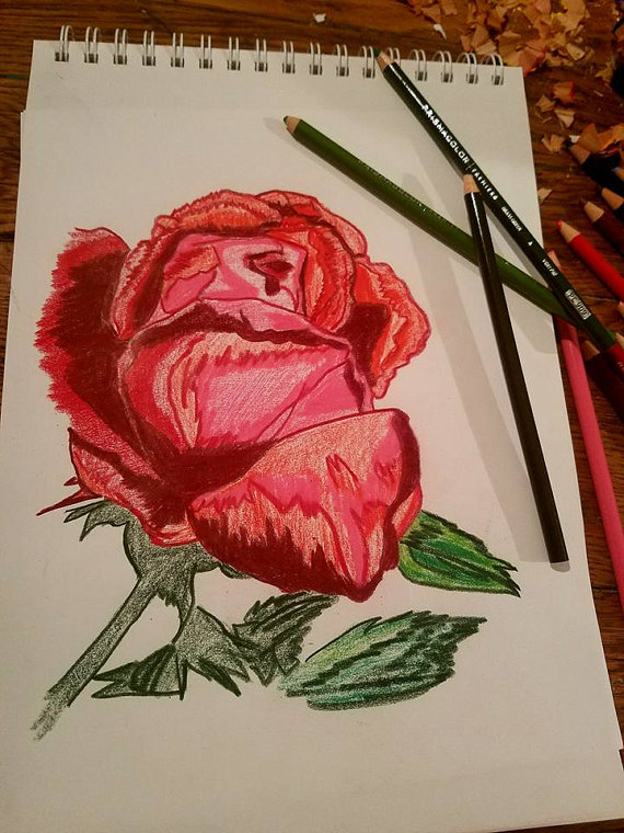 Drawn red rose soft pastel Pastels To Sketched Ready Pencil