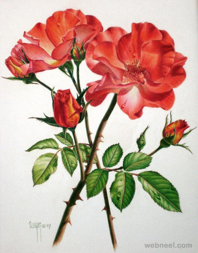 Drawn red rose special Drawings susak flowers for Paintings