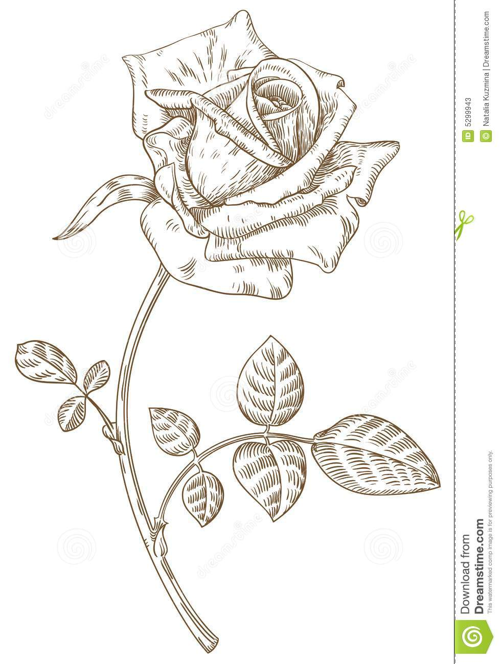 Drawn rose bush one Drawing Outline Outline Rose Realistic