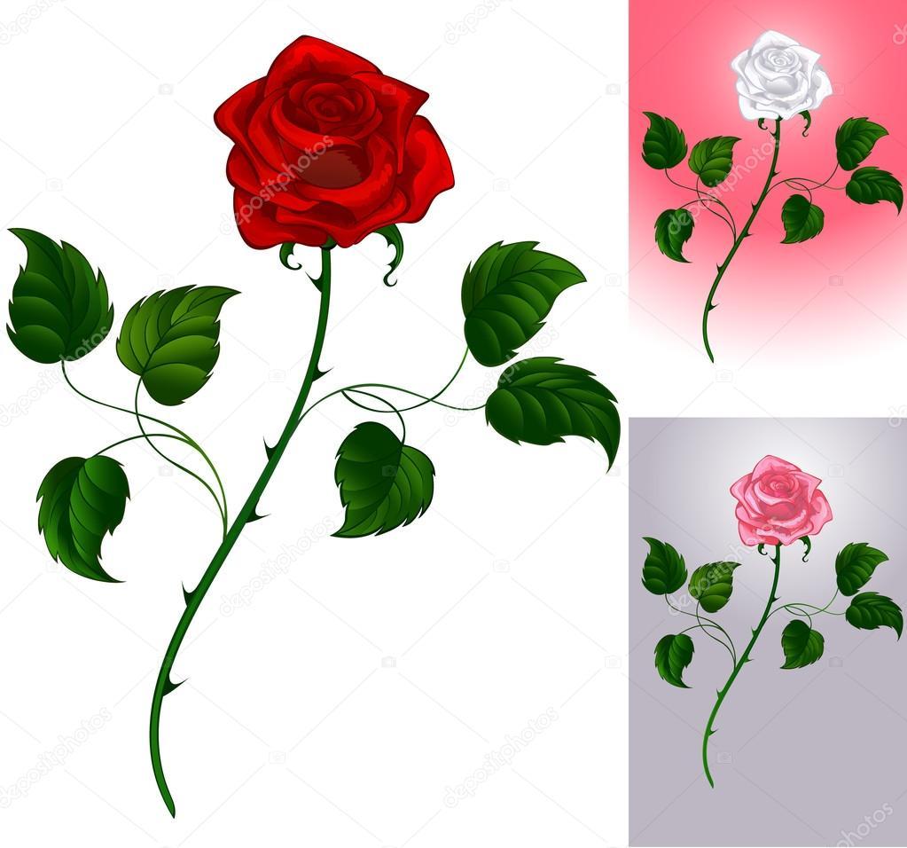 Drawn red rose stem thorn Thorns Rose huguimgs Drawing Red