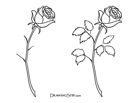 Drawn rose bush simple Drawing a roses How to