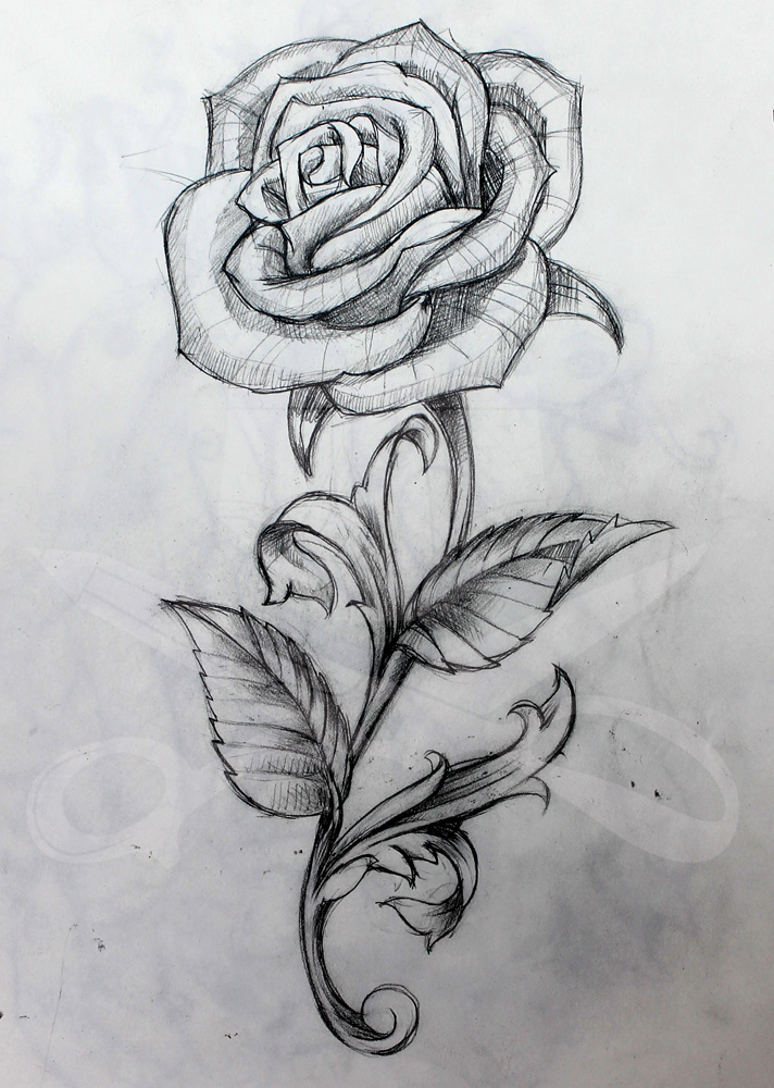 Drawn red rose stem thorn Stem Rose and Rose