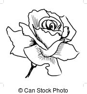 Drawn red rose top view  rose drawn Red hand