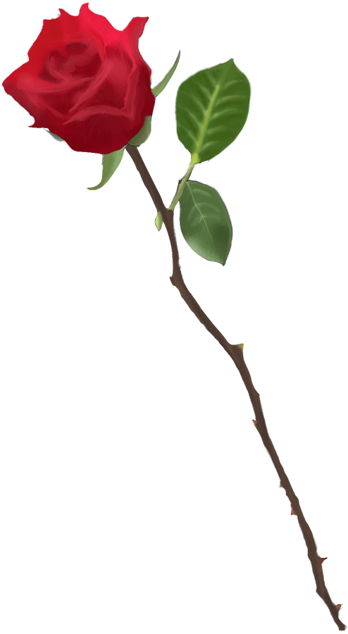 Drawn red rose transparent Drawn Drawing Red Red Project