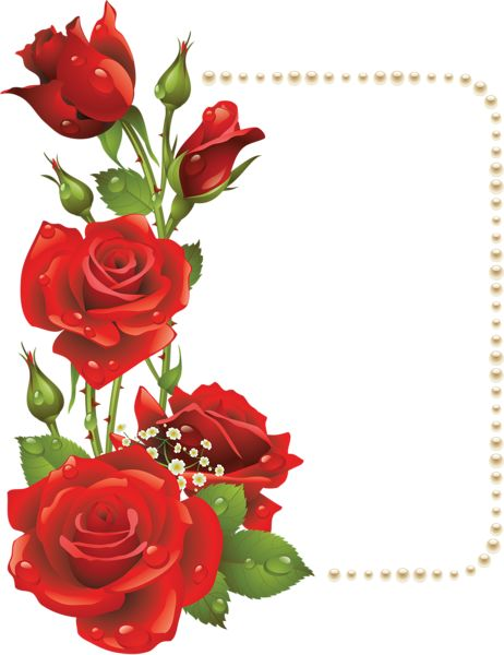 Drawn red rose transparent Best RosesBeautiful png Pinterest ·