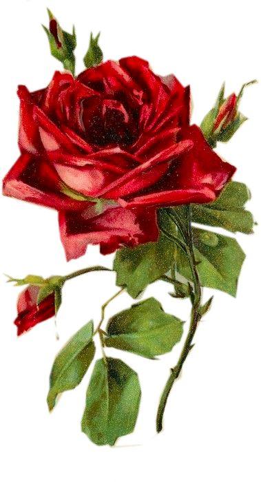 Drawn red rose valentine rose D ROSE Art Collage/Altered 533