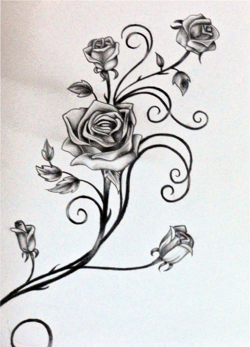 Drawn vine Vines Vine by Drawings Roses