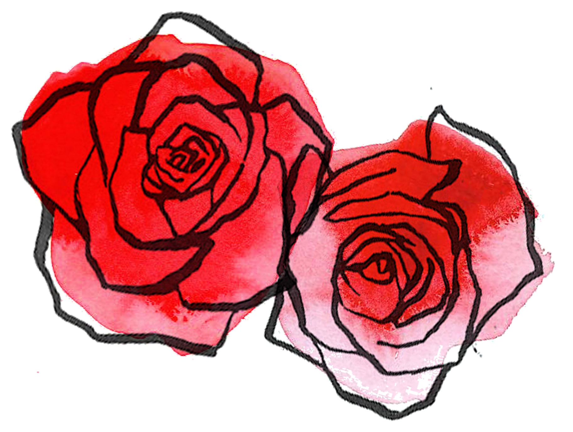 Drawn red rose watercolor Easy Alfa Rose Showing Drawing