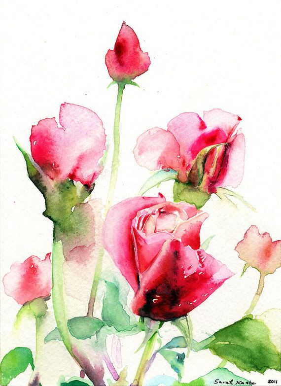 Drawn red rose watercolor Roses Watercolor Painting flowers Red