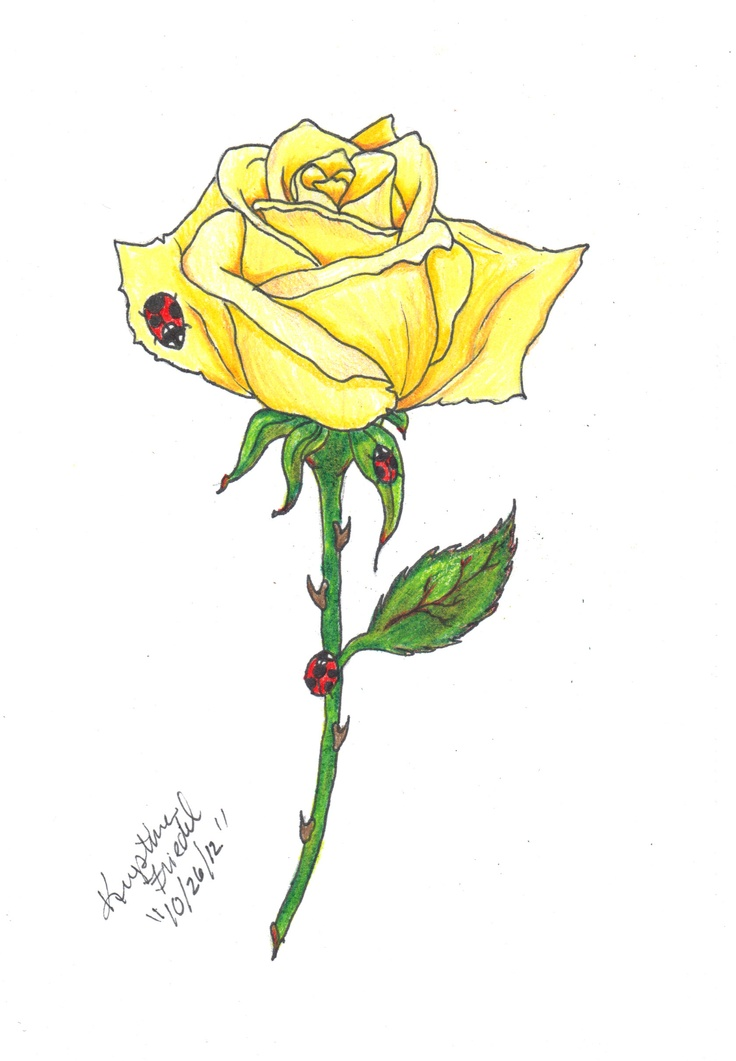 Drawn red rose yellow rose Download With Rose danielhuscroft 14