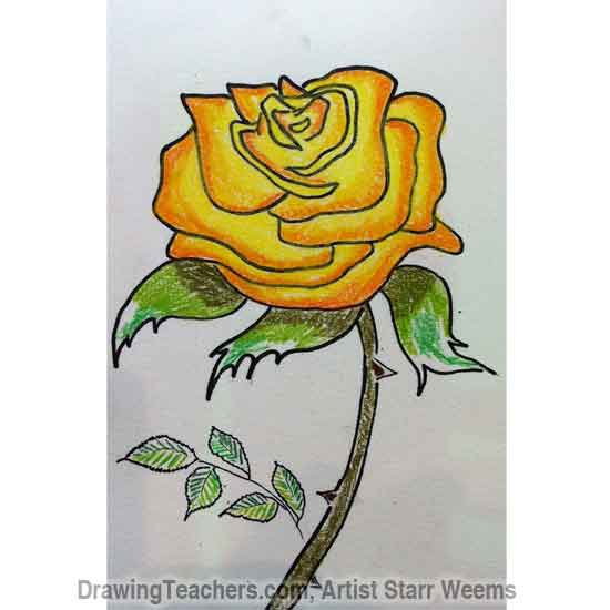 Drawn red rose yellow rose Roses Draw How to How