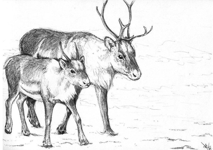Drawn reindeer Drawing Pencil Images Realistic Reindeer