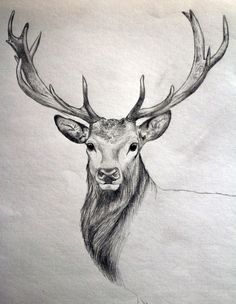 Drawn reindeer awesome Drawings Art by Awesome meaning