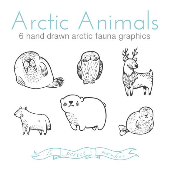 Drawn reindeer awesome Walrus Owl • Bear Illustrations