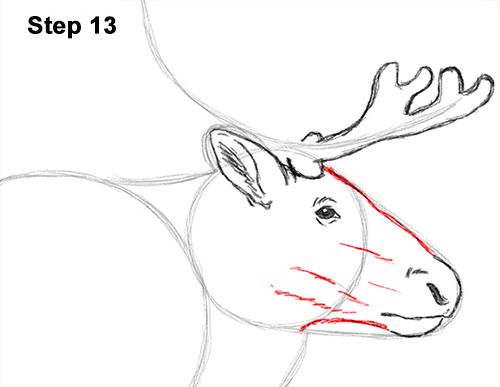 Drawn reindeer caribou Draw 13 Reindeer How Reindeer