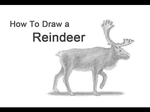 Drawn reindeer caribou How Reindeer a to Reindeer