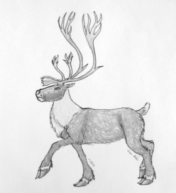 Drawn reindeer caribou With trying so ground and