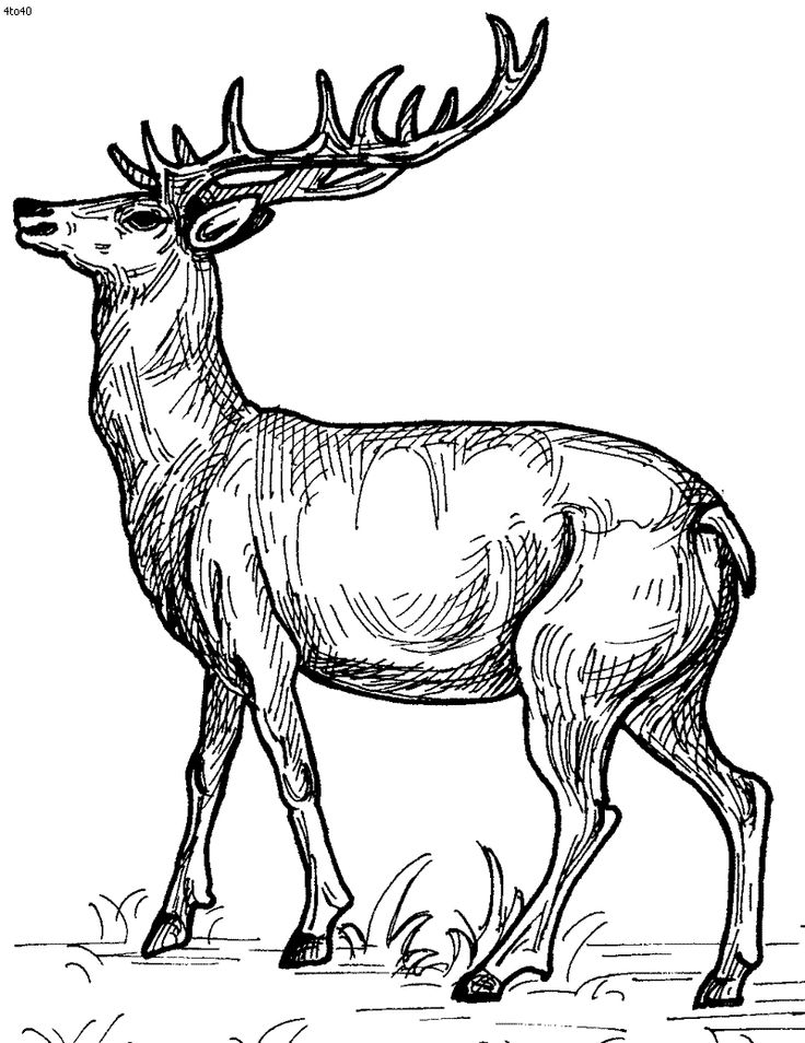 Drawn reindeer color Best Animals Animals Pin on