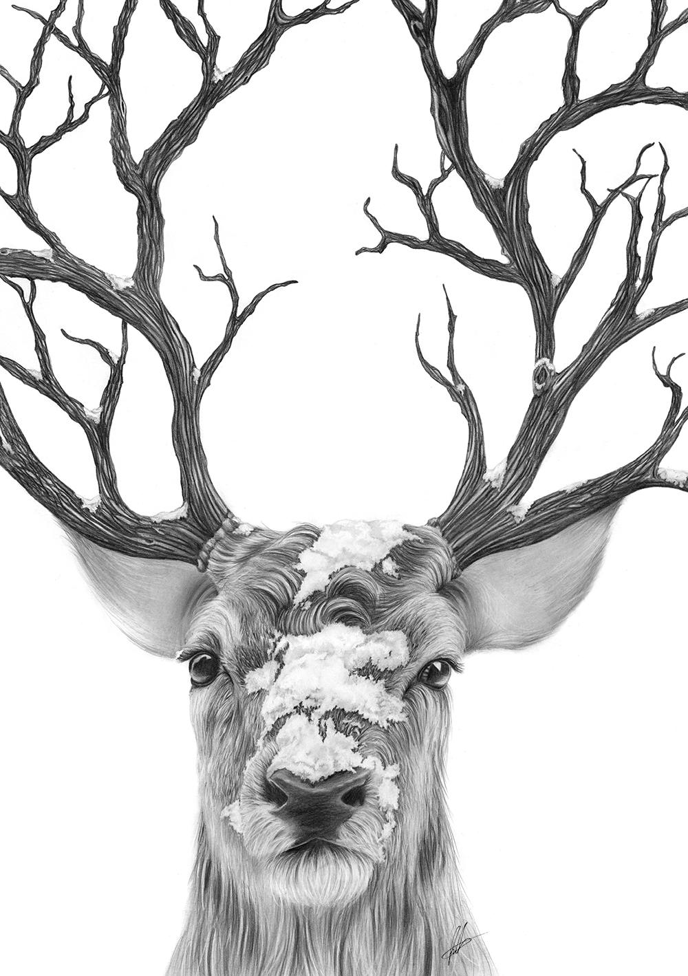Drawn reindeer creative Drawings Laura de très