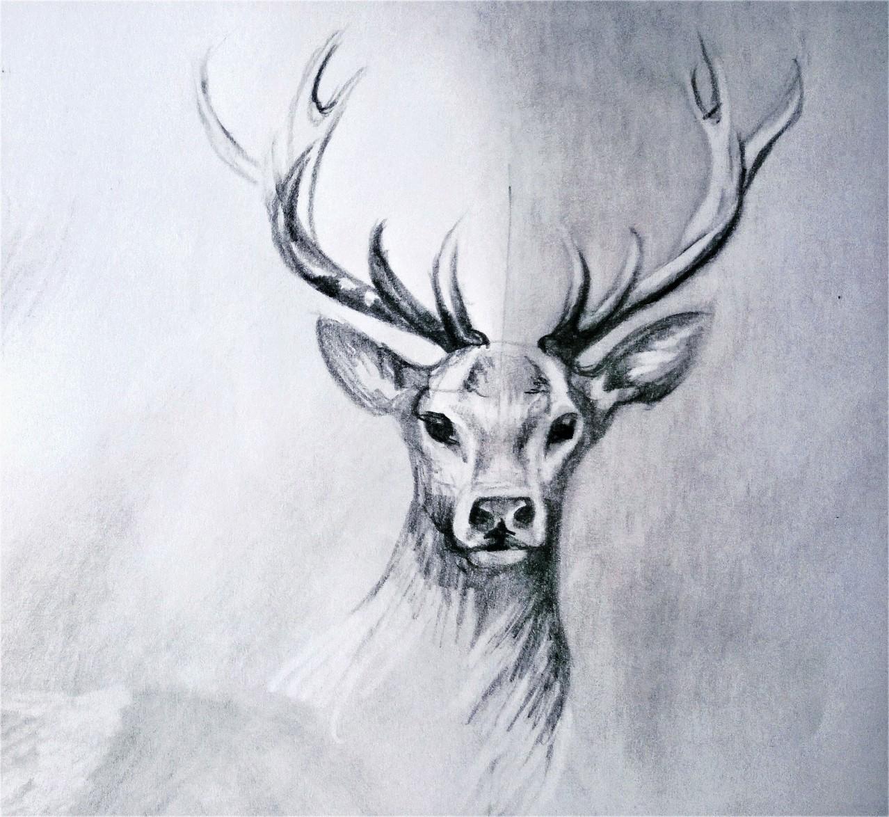 Drawn reindeer majestic 2 deer Lijn  on