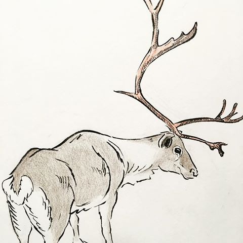 Drawn reindeer pen and ink And #holiday Reindeer # Instagram