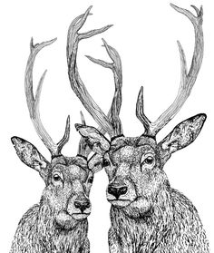 Drawn buck pen and ink Pen > ink Of Find