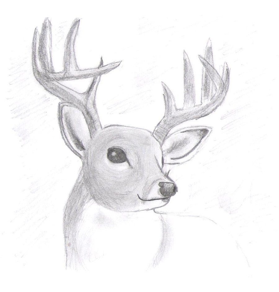 Drawn reindeer realistic With 47 Your  How
