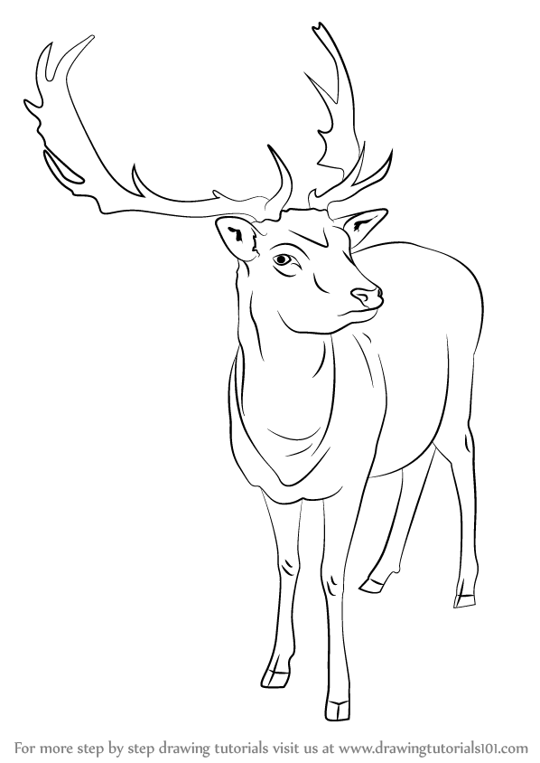 Drawn reindeer sketch Step : Drawing : Step