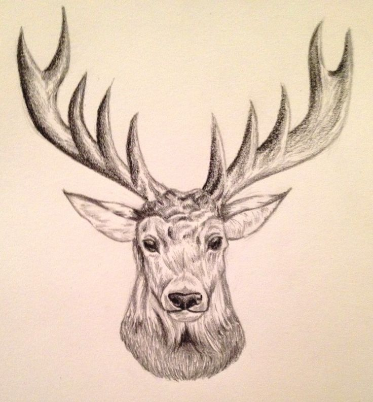 Drawn reindeer sketch Time pencil best 9 sketch