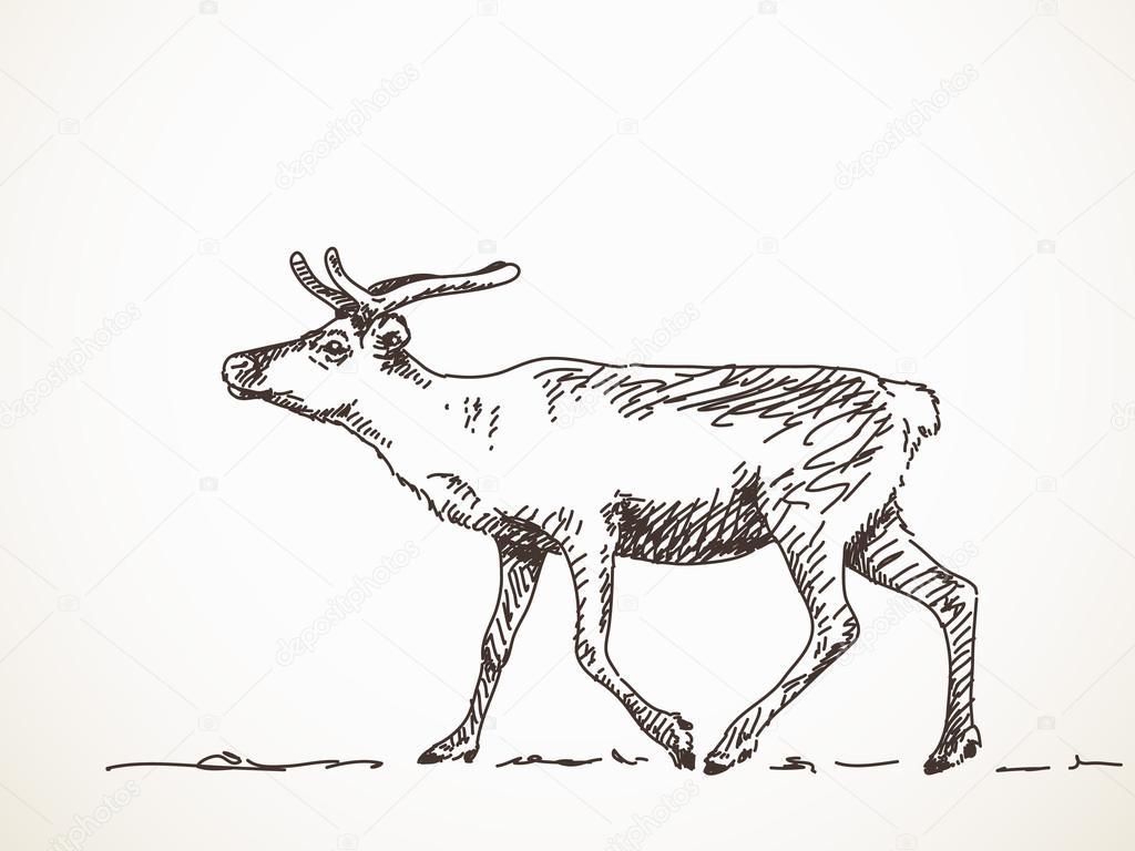 Drawn reindeer vector Hand #93979862 Stock — Vector