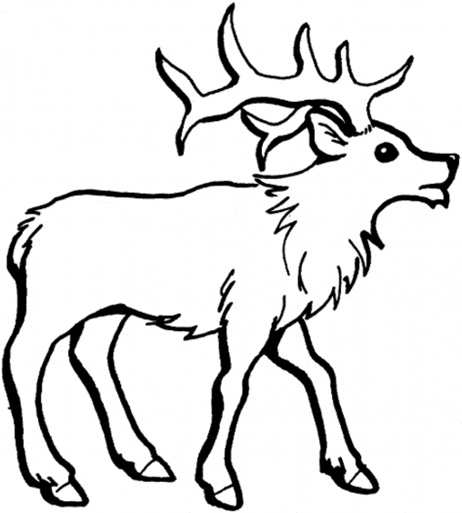 Drawn reindeer wild christmas Coloring Coloring Pages Wild Printable