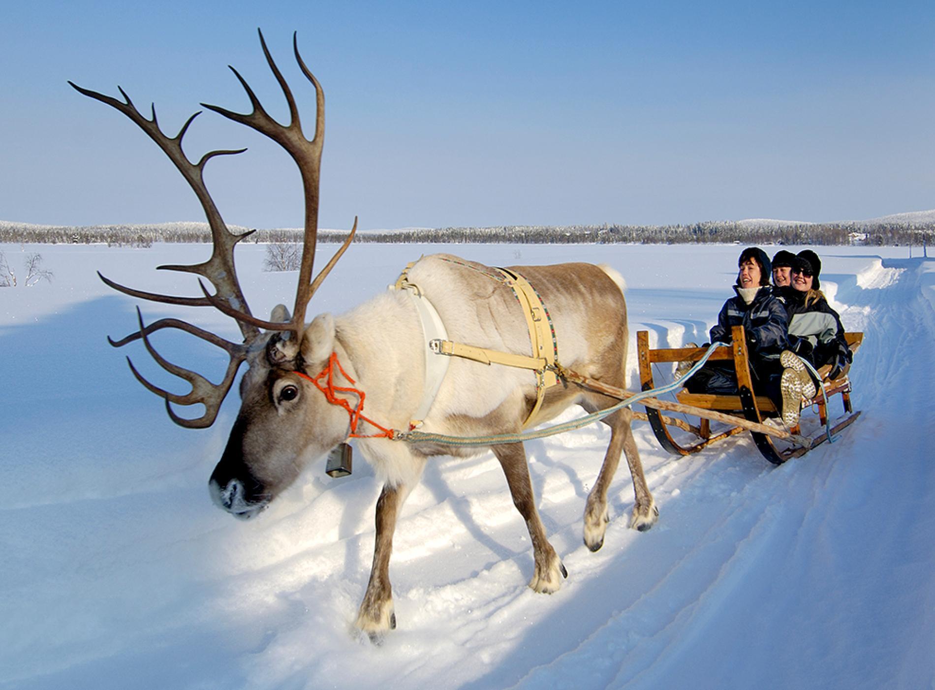 Drawn reindeer winter Best National Geographic  Winter