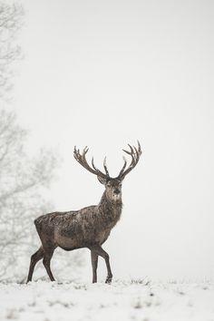 Drawn reindeer winter Deer Pinterest photography Nature winter