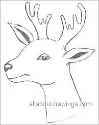 Drawn reindeer xma Reindeer Pencil Christmas Drawings Drawing
