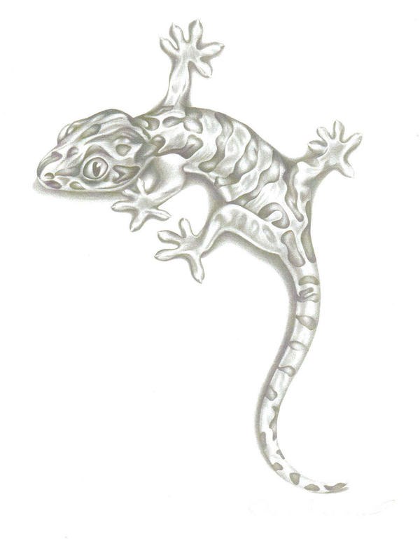 Drawn reptile Pencil  by on awsomeaussies206