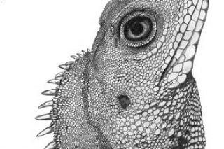 Drawn reptile Contest Drawn Art Winners to