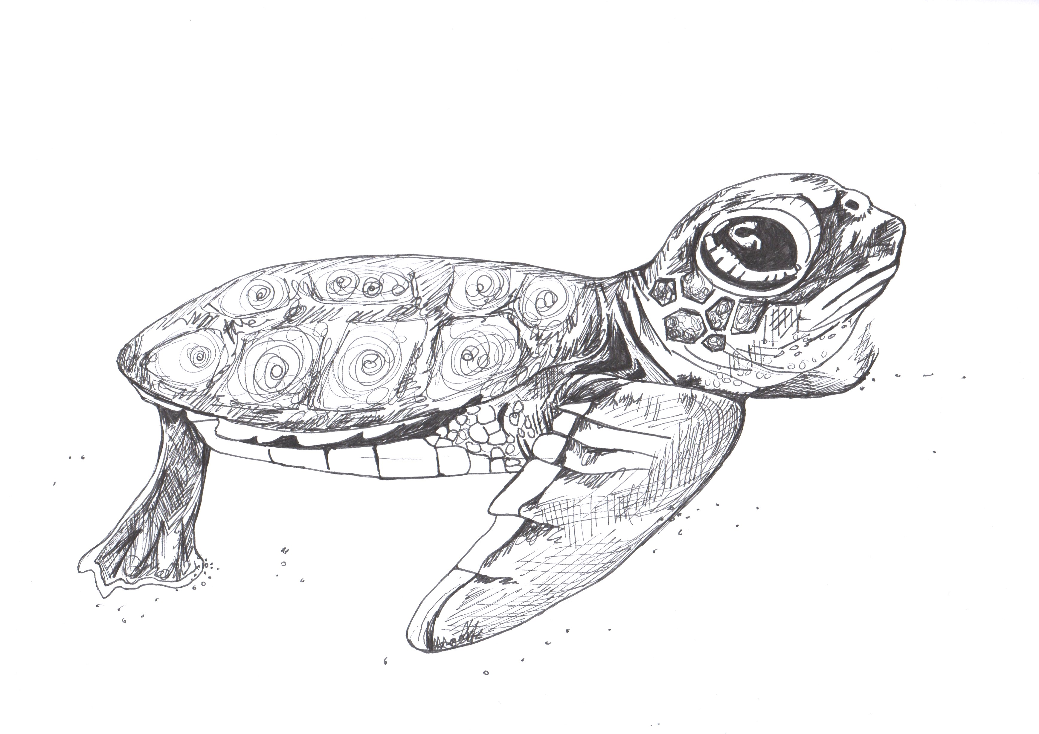 Drawn reptile baby Turtle Drawing baby baby Pen
