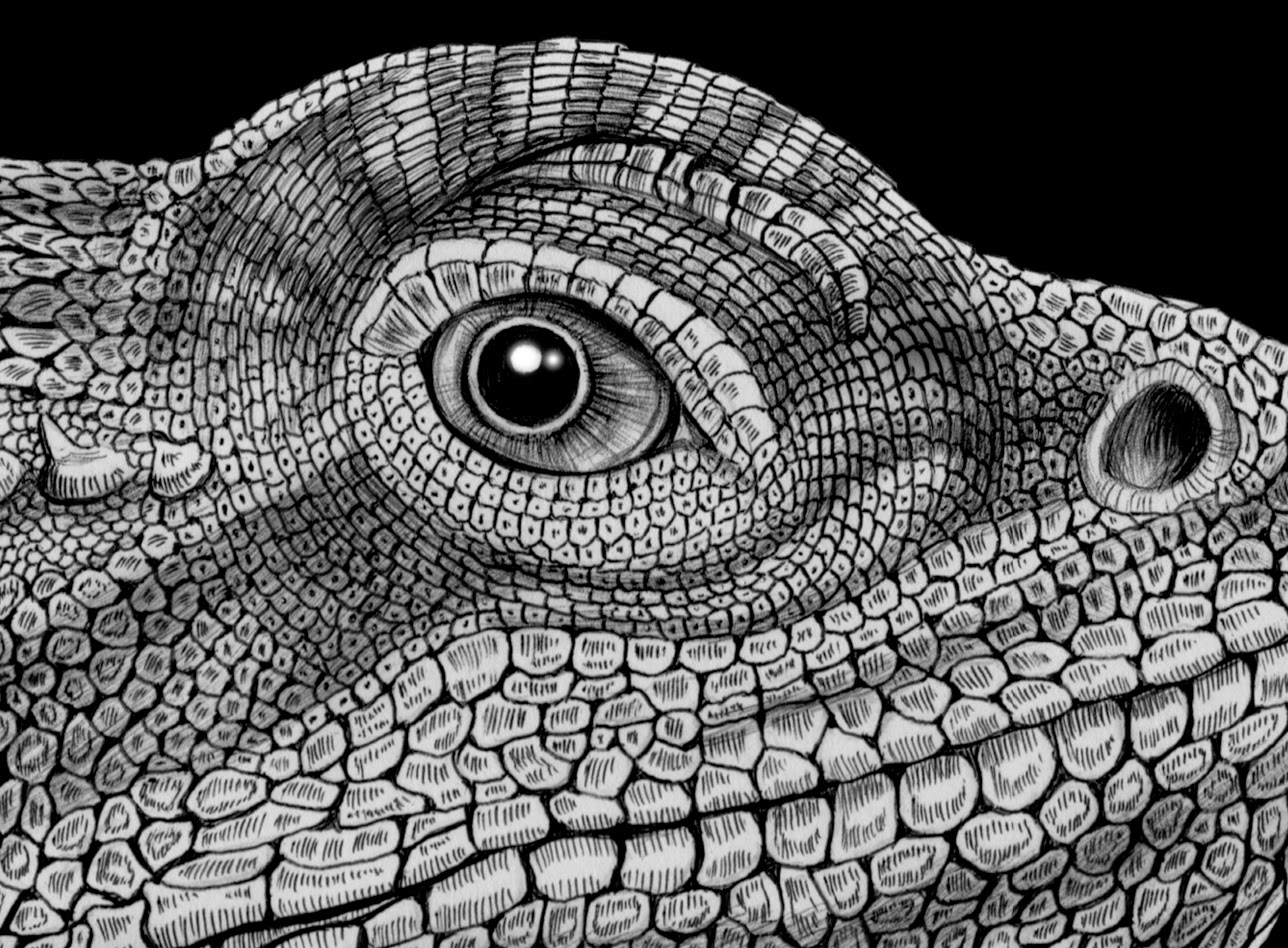 Drawn reptile bearded dragon The Art drawing Jeffs finished