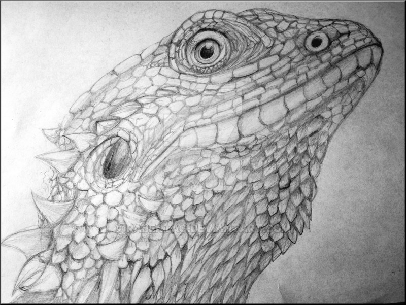 Drawn reptile bearded dragon By Bearded Dragon on by