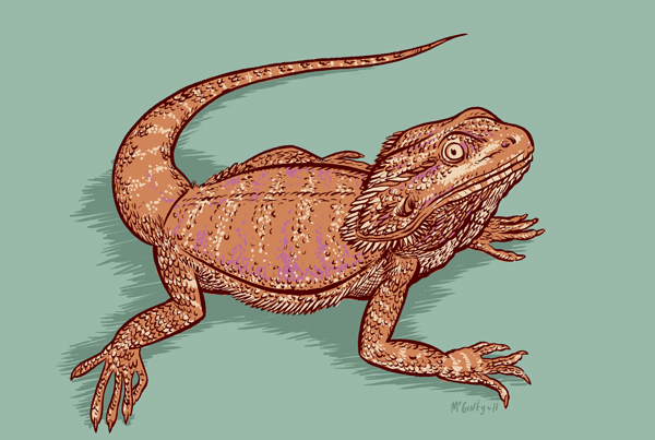 Drawn reptile bearded dragon Alphabet Paper variety Before drawing