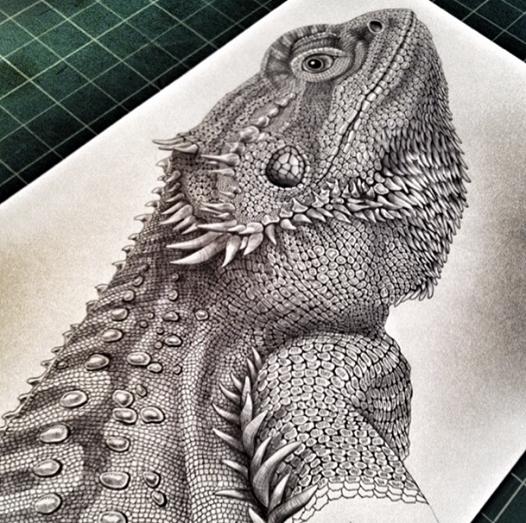 Drawn reptile bearded dragon  Jeffs Tim Art