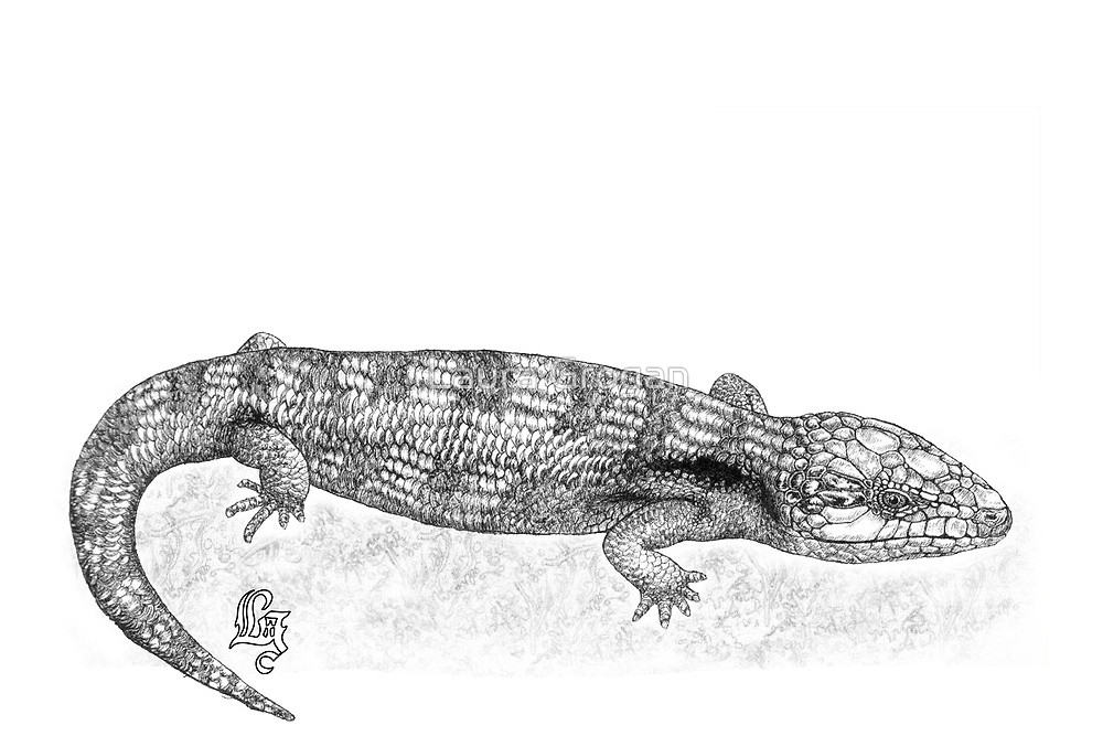 Drawn reptile blue tongue lizard Bluetongue Laura lizard