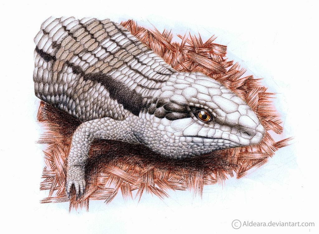 Drawn reptile blue tongue lizard Blue by Tongue Lizard on
