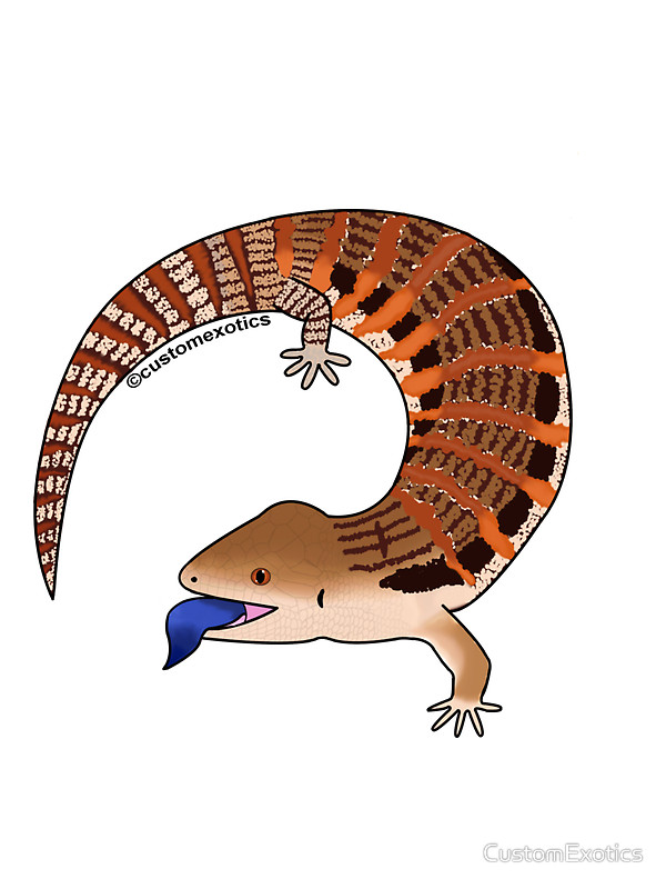 Drawn reptile blue tongue lizard Northern Stickers Skink CustomExotics Northern