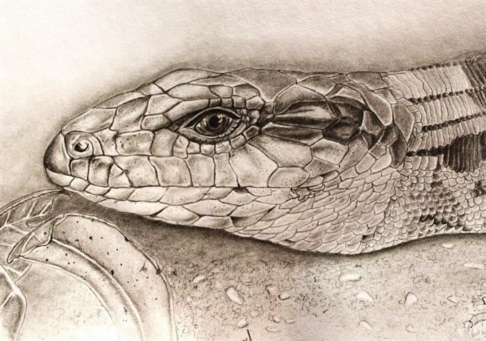 Drawn reptile blue tongue lizard Blue lizard drawing A3 paper