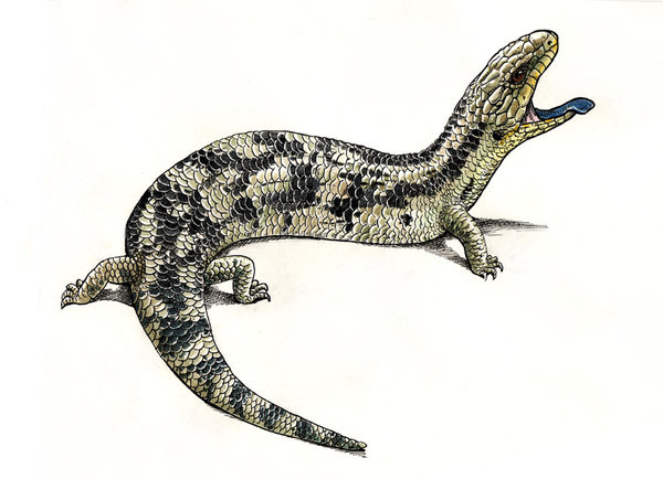 Drawn reptile blue tongue lizard The Snake lizard Artist the
