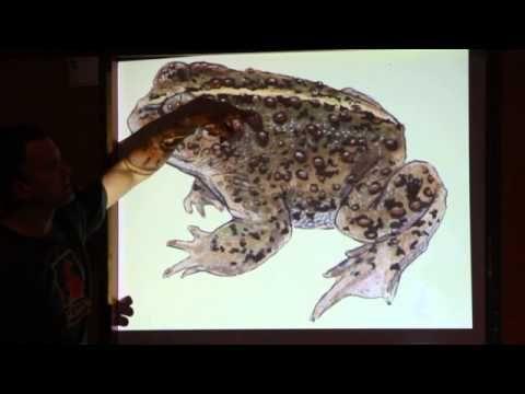 Drawn reptile buzzard References anatomy on YouTube Pinterest