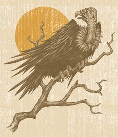 Drawn reptile buzzard Drawing Drawings Google vulture Pinterest